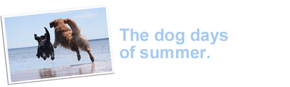 The dog days of summer.
